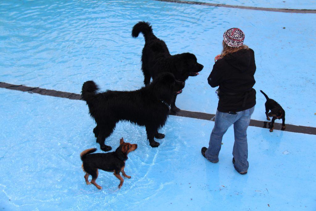 Hundeschwimmen im Freibad Landau